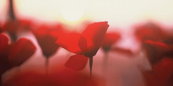 15 años tiene (mi amor y) Flower by Kenzo #elpoderdeunaflor